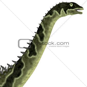 Agustinia Dinosaur Head