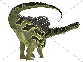 Agustinia Dinosaur Tail