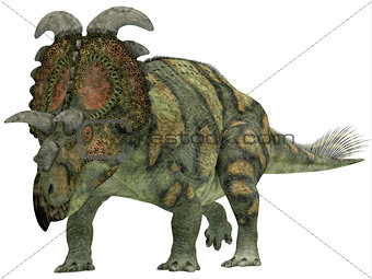 Albertaceratops over White