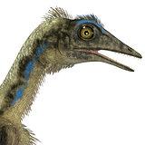 Archaeopteryx Dinosaur Head