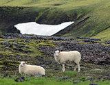Lambs graze in the valley.
