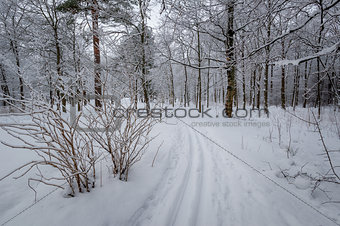 Ski piste