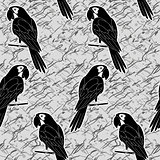 Seamless pattern, black and white parrots
