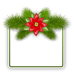 Christmas postcard with fir twigs and flower poinsettia