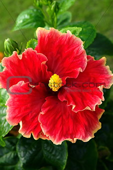 Single Macro Flower with natural Background