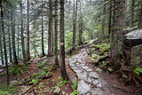 Mountain trail in Tatry, Poland.