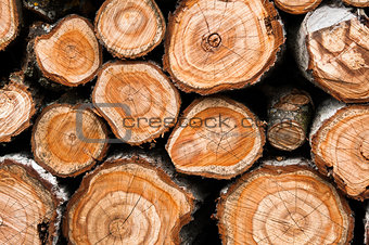 Cross section of the timber close up for background