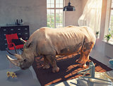 rhinoceros in the room