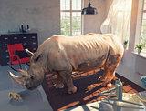 rhinoceros in the room