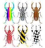 pattern  beetles