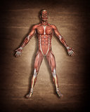 3D male medical figure with muscle map on grunge background