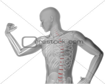 3D male medical figure flexing arm