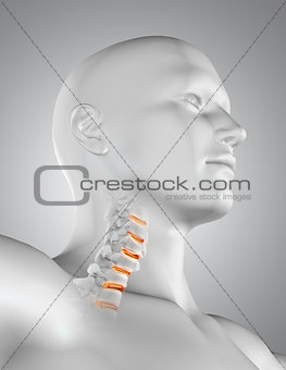 3D male medical figure with skeleton neck highlighted