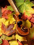 Maple Violin Scroll on Bright Autumn Maple Leaves