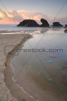 Blue Blubber jelliyfish at sunrise