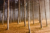Autumn forest in Pyatigorsk.