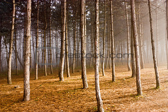 Autumn forest in Pyatigorsk.