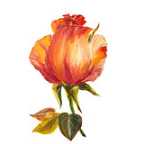 Rose isolated on white, oil painting