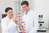 Smiling scientists working attentively with dna model