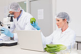 Scientists examining green pepper