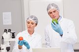 Scientists examining attentively green pepper and tomato