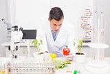 Focus scientist examining peppers
