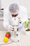 Scientist examining peppers with microscope