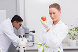 Focus scientist looking at tomato