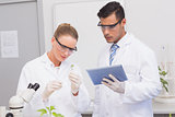 Scientists examining leaf of plants