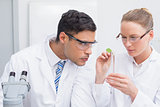 Scientists examining a leaf