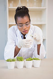 Scientist examining sprouts