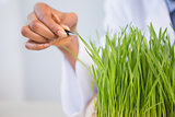 Scientist examining sprouts