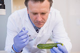 Scientist injecting a courgette