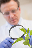 Scientist examining plants with magnifying glass