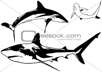 Caribbean Reef Shark Set