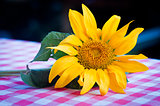 sunflower on the table in the countryside