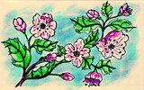 Sakura Doodle
