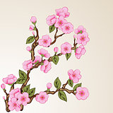 Floral background with sakura