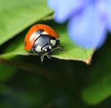 Ladybug in spring garden