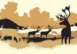 Reindeer tundra