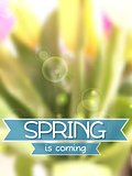 Spring background. Blurred tulips bouquet