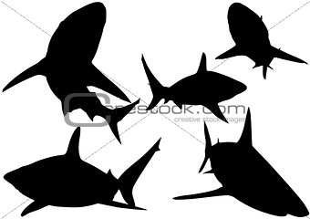 Blacktip Reef Shark Silhouettes