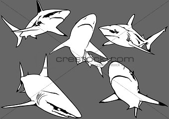 Blacktip Reef Shark Set