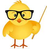 Teacher chick