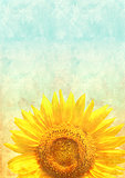 Texture of the old paper with sunflower