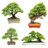 Set of bonsai