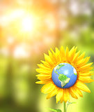 Sunflower and Earth on sunny background