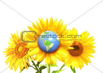 Three bright yellow sunflowers and Earth