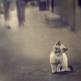 Kitten On The Street