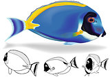 Powder Blue Tang Set